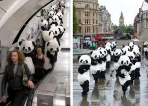 100匹以上のパンダがトラファルガー広場で太極拳