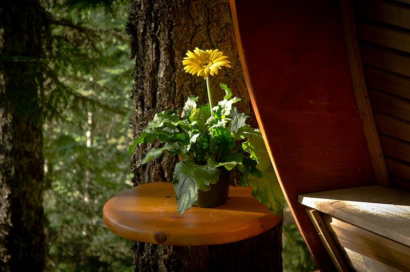 カナダウィスラーにある秘密のツリーハウス「The HemLoft」8