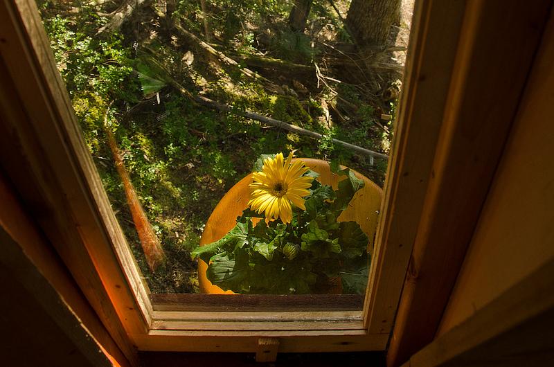 カナダウィスラーにある秘密のツリーハウス「The HemLoft」11