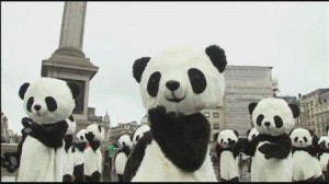 108匹のパンダが太極拳