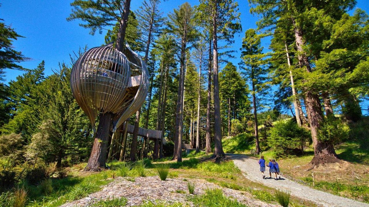 The Redwoods Treehouse6