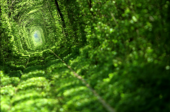 Tunnel of Love in Kleven, Ukraine16