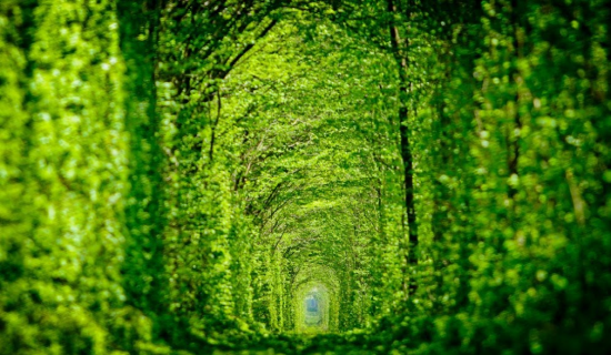 Tunnel of Love in Kleven, Ukraine14
