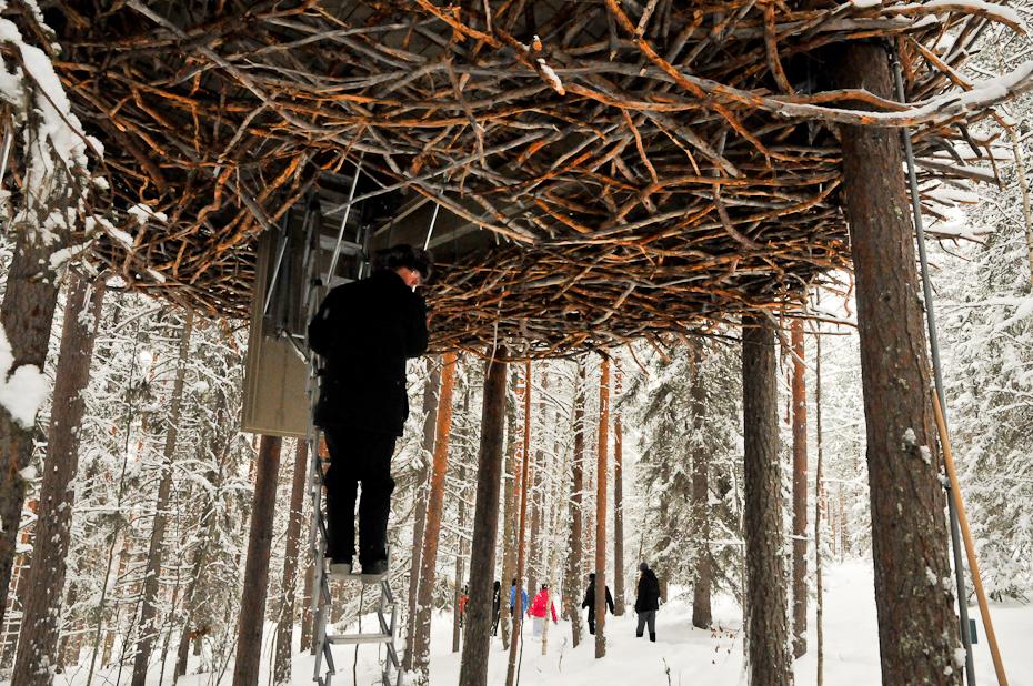 treehotel-the-birds-nest 鳥の巣のようなツリーホテル14