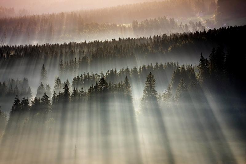 この世のものとは思えない美しい霧がたちこめる自然風景写真16