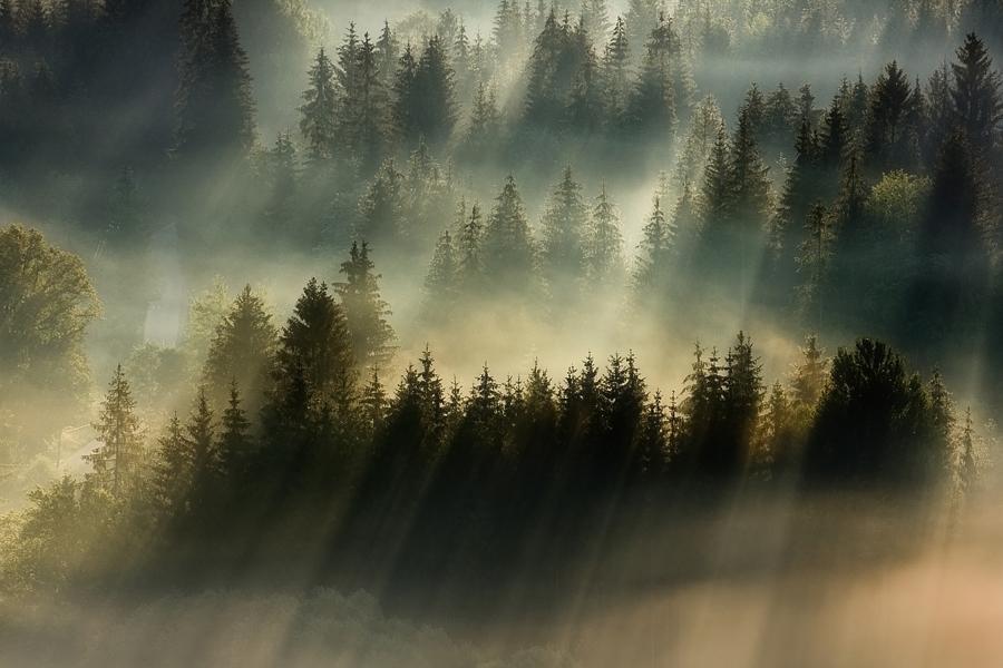 この世のものとは思えない美しい霧がたちこめる自然風景写真4