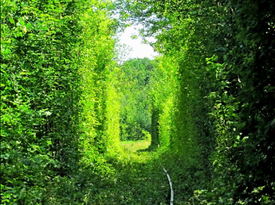 Tunnel of Love in Kleven, Ukraine17