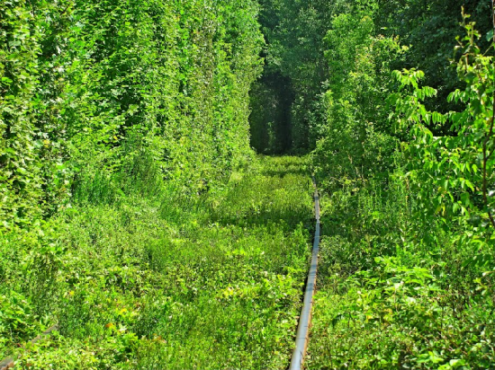 Tunnel of Love in Kleven, Ukraine1
