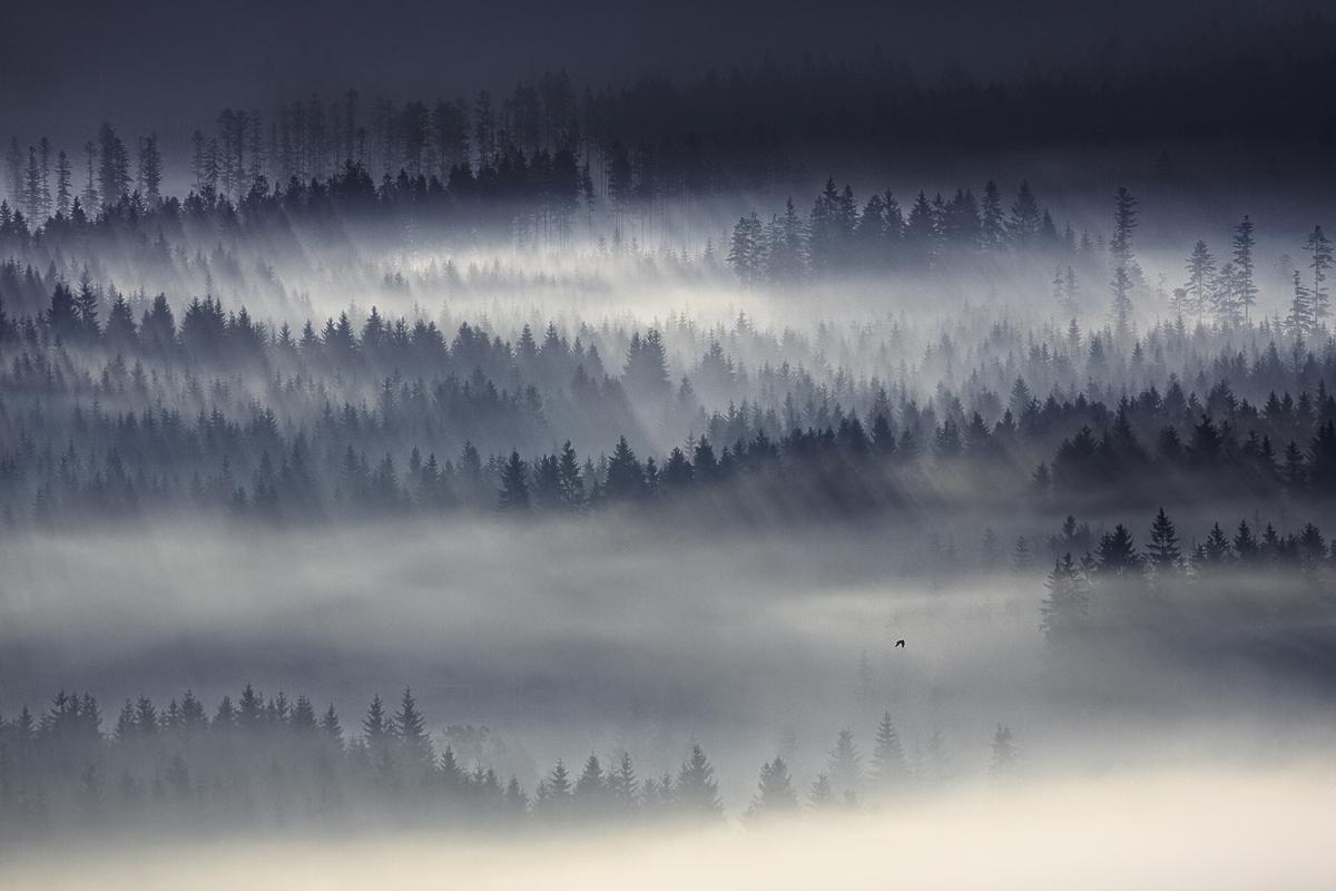 この世のものとは思えない美しい霧がたちこめる自然風景写真11