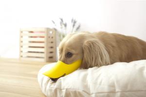 """口輪に見えない口輪""""quack(クァック)""""16"""