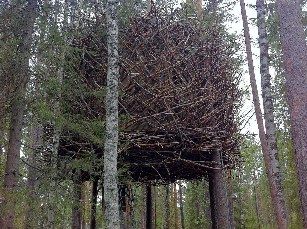treehotel-the-birds-nest 鳥の巣のようなツリーホテル15