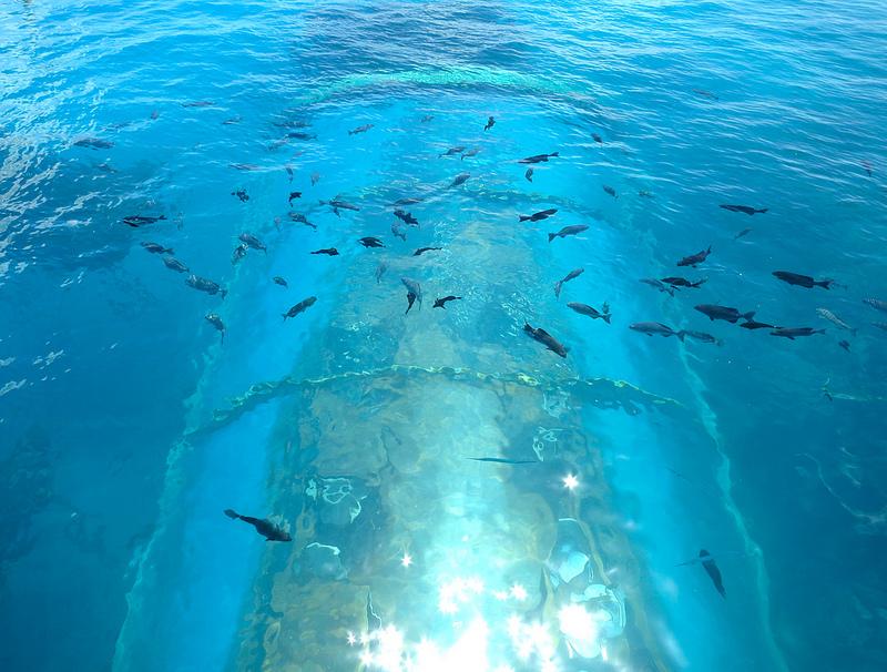 海中レストラン Ithaa Undersea4