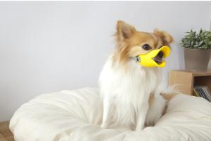 """口輪に見えない口輪""""quack(クァック)""""15"""