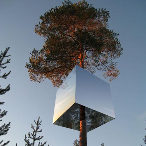 鏡のツリーハウス8