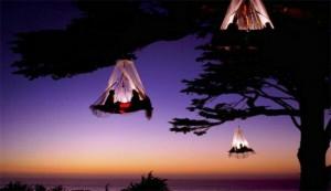 TREE CLIFF CAMP2