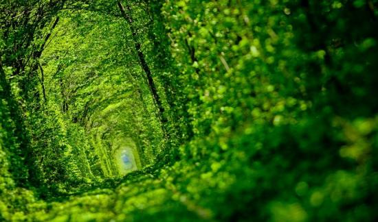 Tunnel of Love in Kleven, Ukraine15