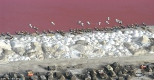 ヱヴァンゲリヲン新劇場版に出てきそうな色の湖3