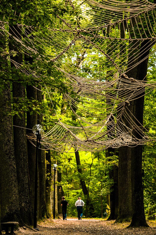 巨大なクモの巣3