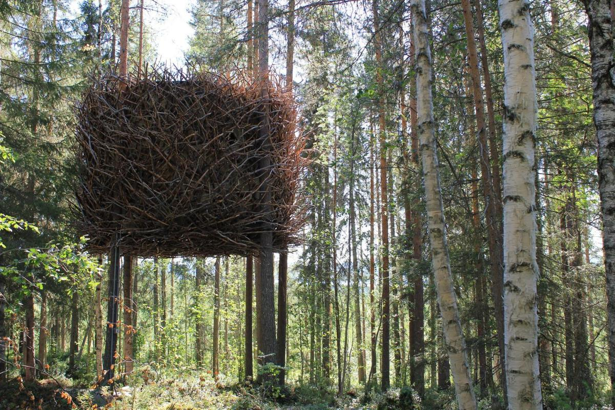treehotel-the-birds-nest 鳥の巣のようなツリーホテル6