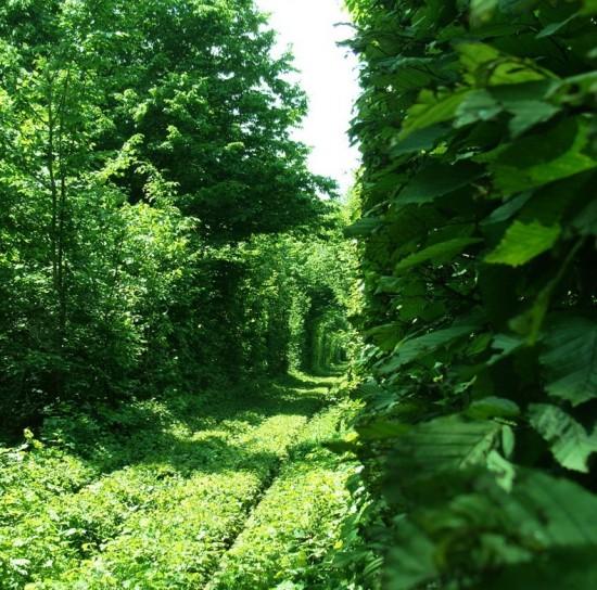 Tunnel of Love in Kleven, Ukraine10