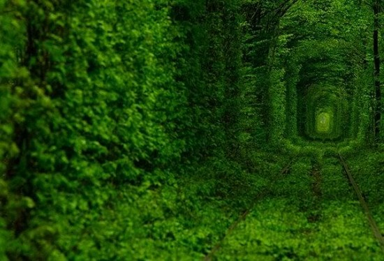 Tunnel of Love in Kleven, Ukraine5