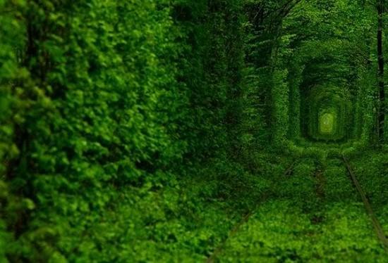 Tunnel of Love in Kleven, Ukraine5