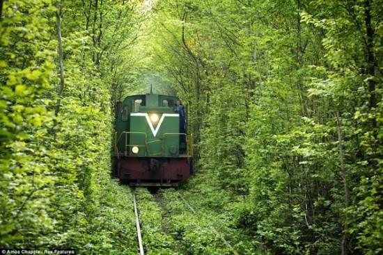 Tunnel of Love in Kleven, Ukraine9