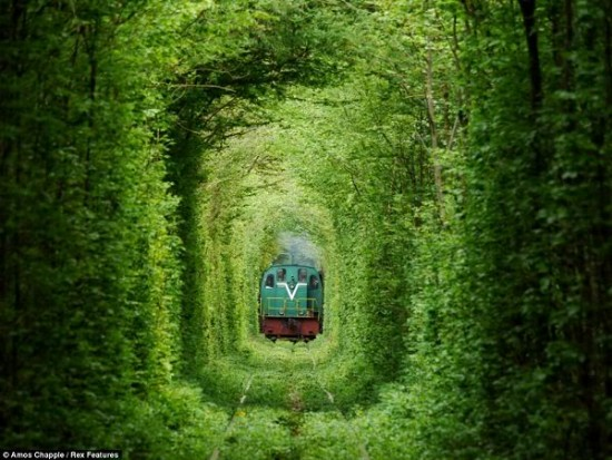Tunnel of Love in Kleven, Ukraine8