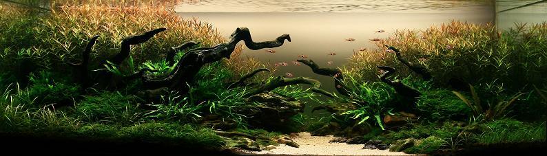 1-nguyen-tien-dung-2009-iaplc-grand-prize