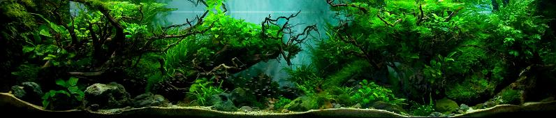 10-aj-judy-prajitno-putra-forest-aquarium