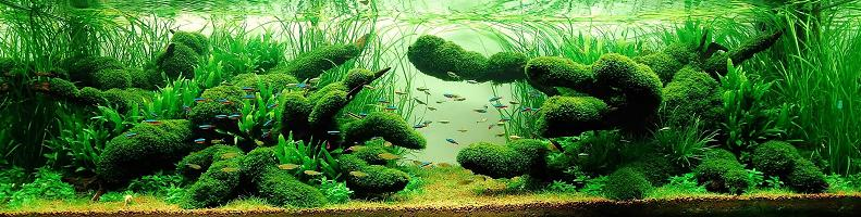 14-wong-kam-aquarium-hobbyist