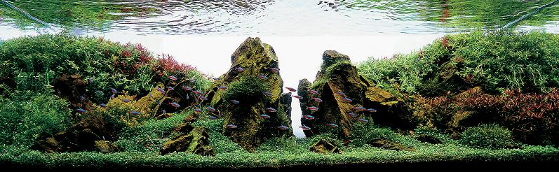 20-hidekazu-tsukiji-aquascaping