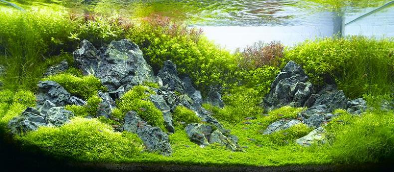 21-hironori-handa-underwater-landscape