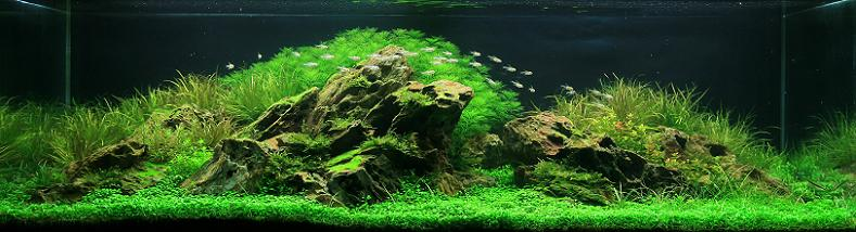 24-nguyen-ngoc-tri-nhan-fresh-water-aquarium-inspiration