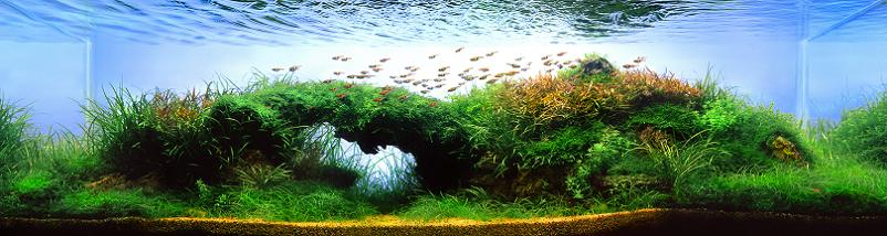 25-artur-frankowski-worlds-best-aquariums