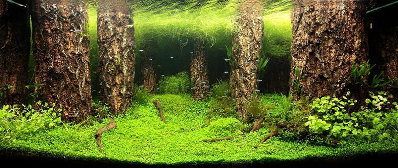 27-jamie-lin-underwater-forest
