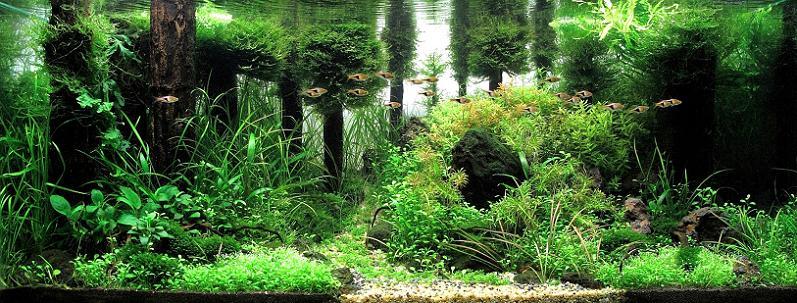 4-josh-sim-kh-underwater-forest-aquarium