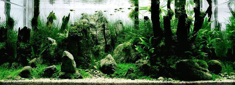 5-wang-chao-incredible-fresh-water-aquarium