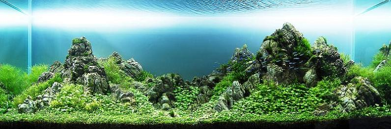 6-chow-wai-sun-underwater-mountain