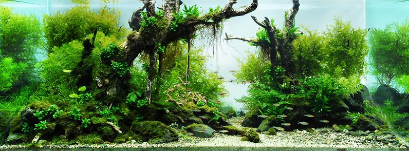 7-lin-tin-chuan-aquascapes