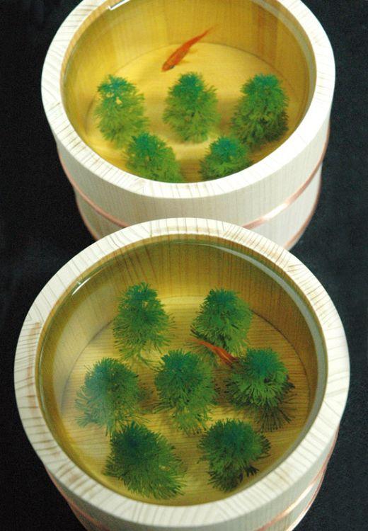 金魚の杜 ForestofKingyos : 2006 木桶、透明樹脂○145×H110mm