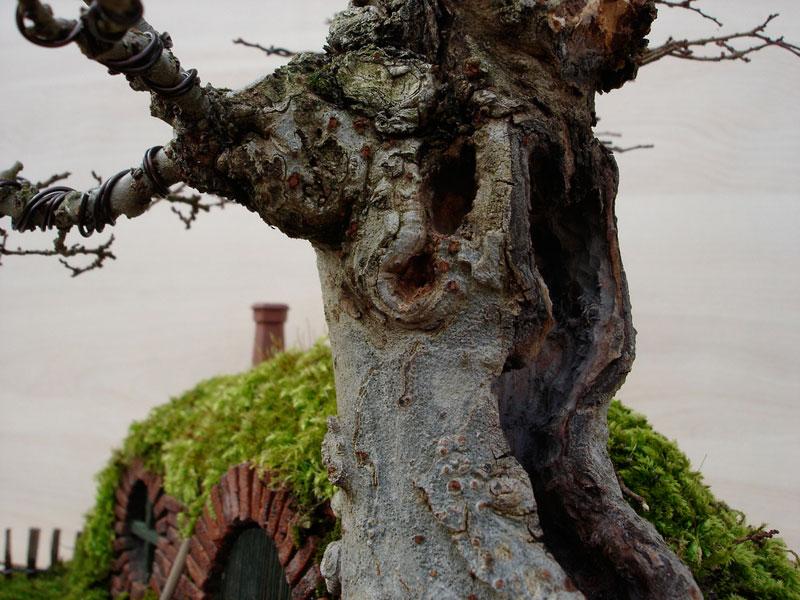 ロードオブザリングの盆栽8