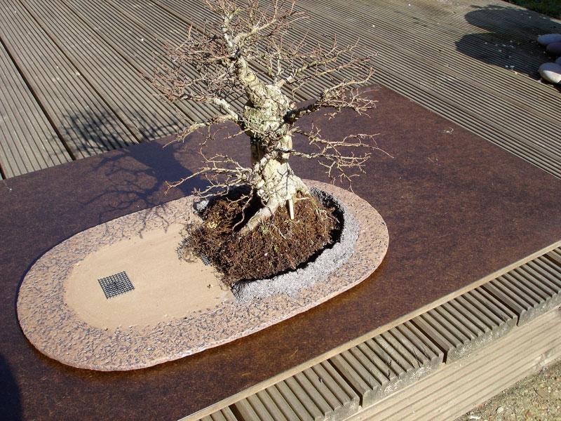 ロードオブザリングの盆栽7