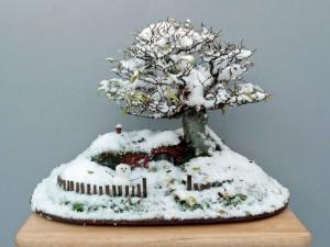 ロードオブザリングの盆栽17