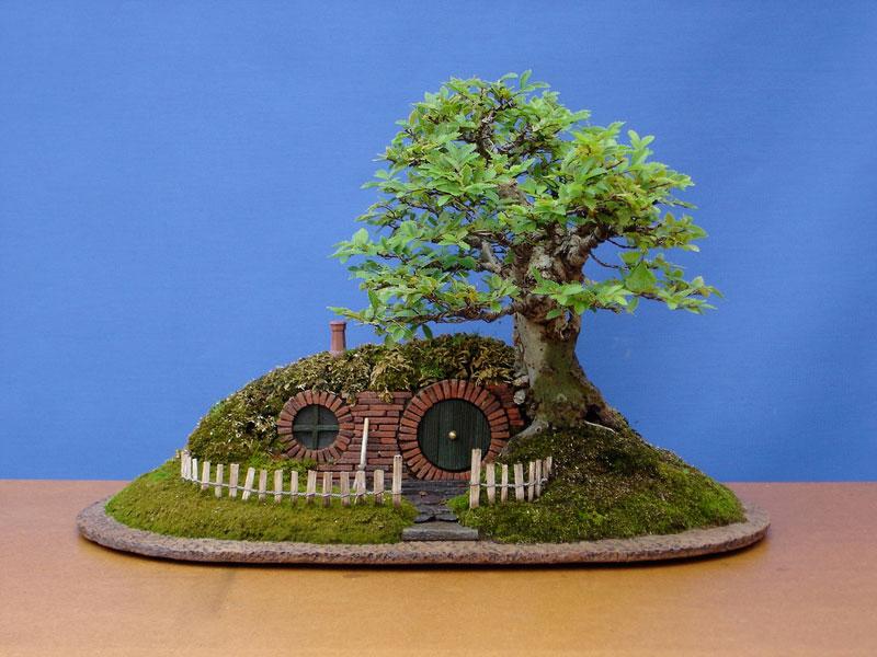 ロードオブザリングの盆栽18