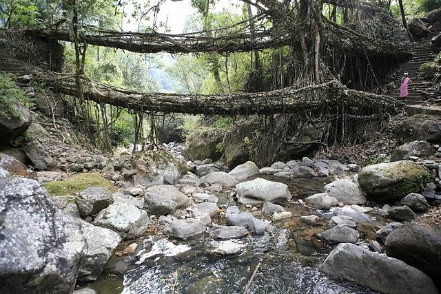 インド北東部の熱帯雨林地域にある、生きた木がそのまま橋になった神秘的な橋。9
