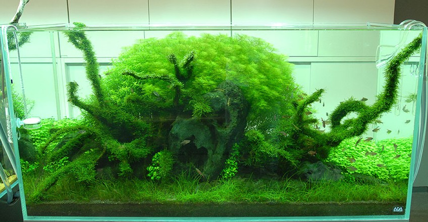 世界で初めてアクアリウムの世界に日本庭園の世界をつくった天野尚(あまのたかし)氏のアクアリウム(水中造園)