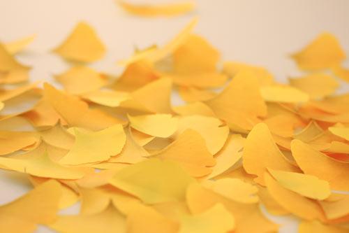 葉っぱの付箋、ポストイット「Leaf-it」11