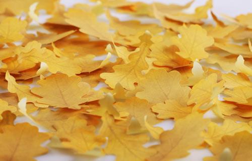 葉っぱの付箋、ポストイット「Leaf-it」15