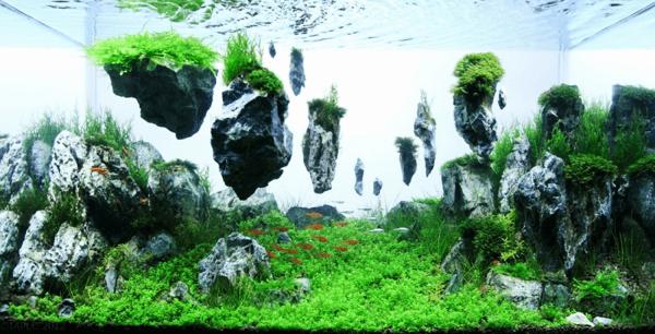 世界水草レイアウトコンテスト20127